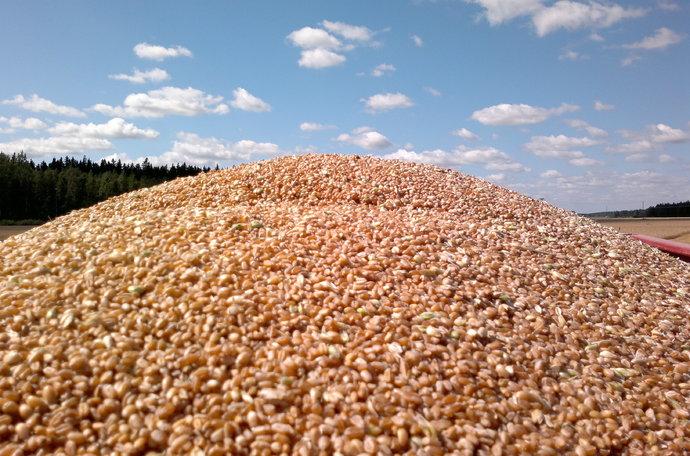 Rendimiento trigo