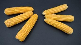 IMAGE cob size potassium