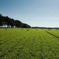 A szénlábnyom csökkentése paradicsom termesztésekor