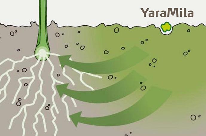 Wygoda w stosowaniu YaraMila