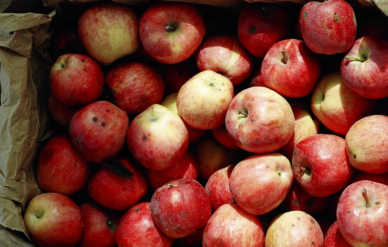 apples with calcium deificiency
