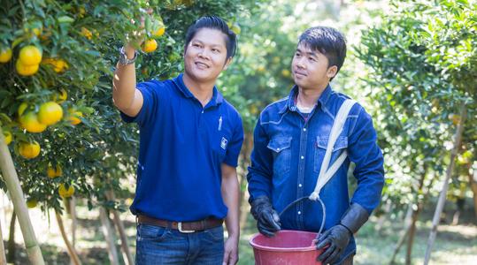 如何提高柑橘产量