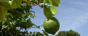 Yara Water Solution in Citrus