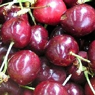 Managing Pitting in Cherries