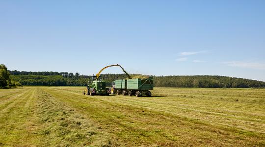 Kaliums rolle i dyrkning af græs