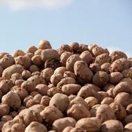 Burgonya tápanyag-ellátási program