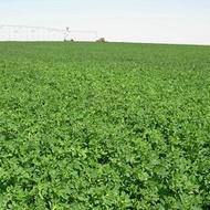 Efecto de magnesio en la calidad de las praderas