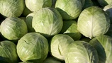 Increasing Calcium, Vitamin C and Glucosinolates Levels in Vegetable Brassica