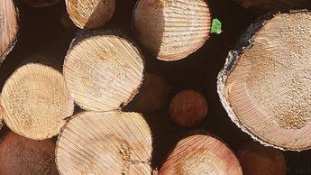Metsänlannoituksen avulla puut kasvavat suuremiksi nopeammin.
