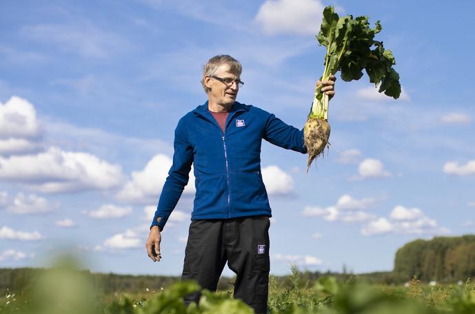 Esko Suomala viljelee myös sokerijuurikasta.
