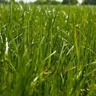 Phosphorus Effects on Grassland Quality
