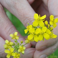 Weeds, Pests and Diseases