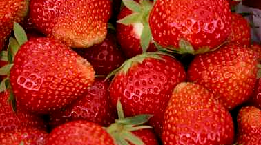 How to increase strawberry yield