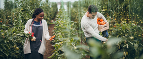 Young couple people picking vegetables