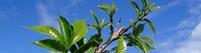 Fertilizantes: Nuestra Filosofía