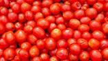 Tomato Weight