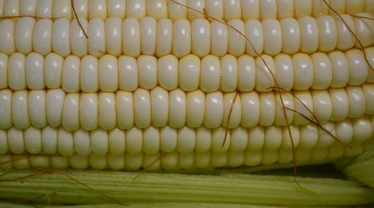 Cómo aumentar el rendimiento del maíz