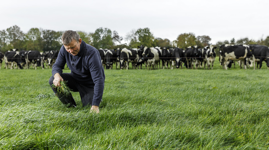 Agronomy Advice - Managing winter grazing