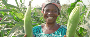 Women in agriculture: empowering female farmers in Africa