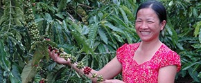 Coffee farmer in Vietnam using Yara crop nutrition solutions
