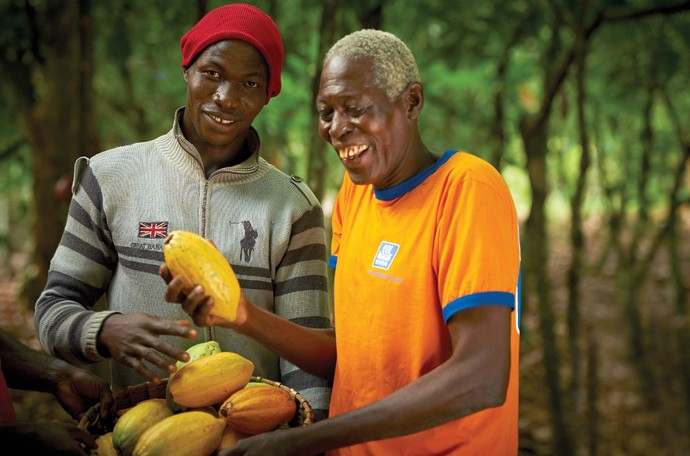 How to increase cocoa yield