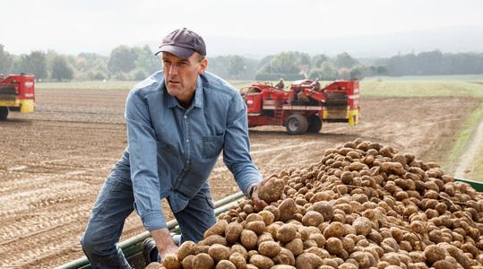 Onze kennis van aardappel