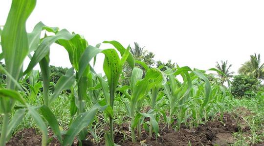 Principi agronomici