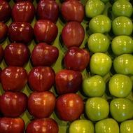 Apple Crop Programme