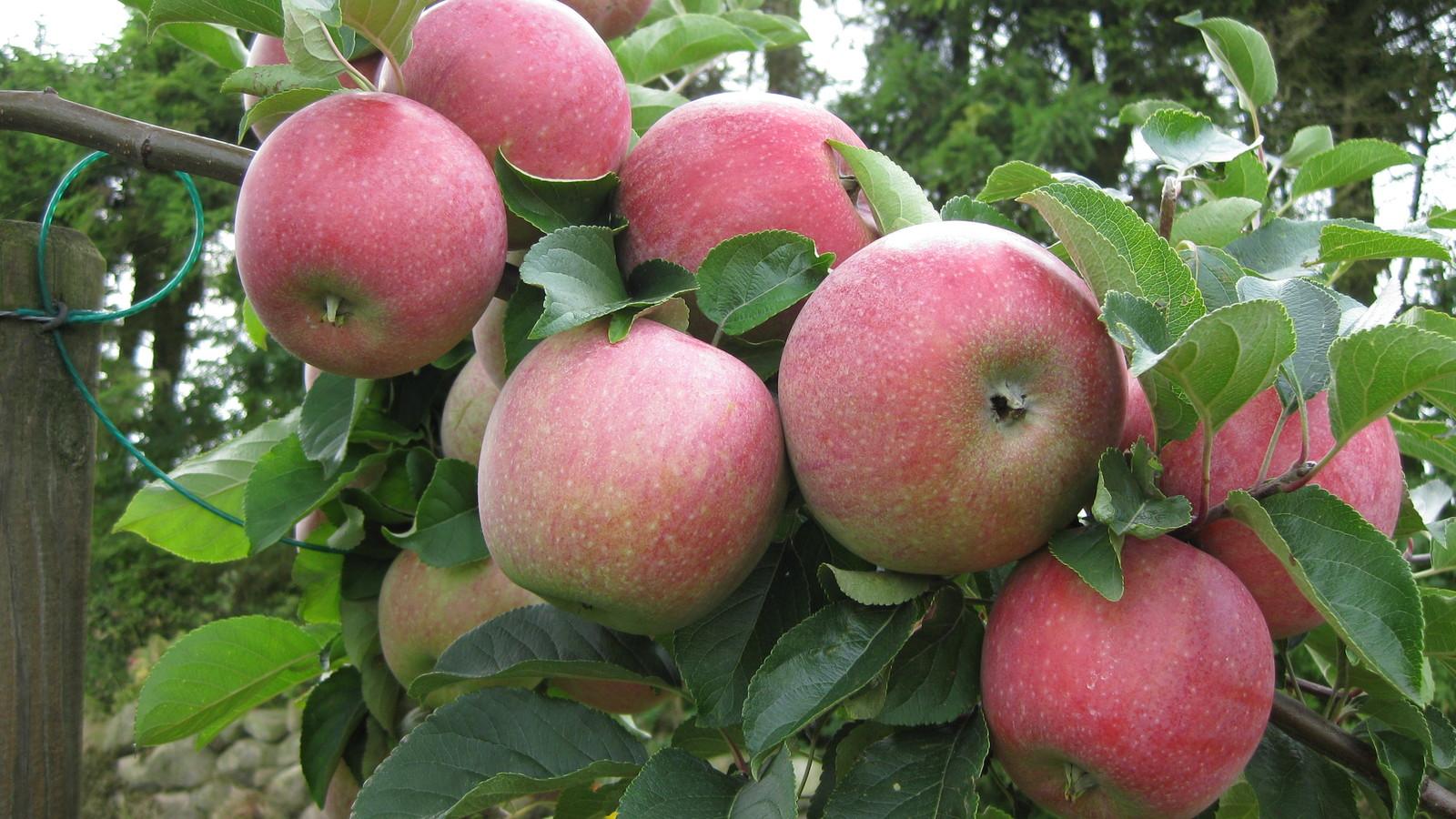 alma crop program