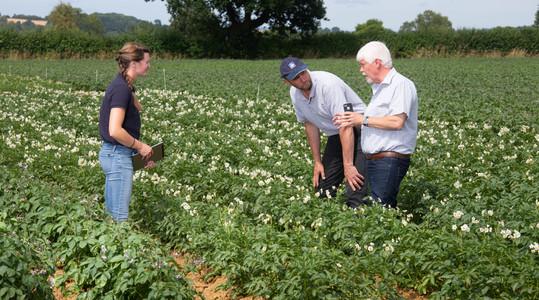 Foliar nitrogen extends potato green canopy duration
