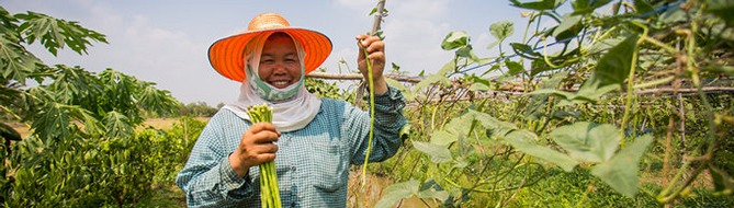 Thai farmer using Yara fertilizers