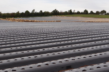Plastic covered hills ready for planting