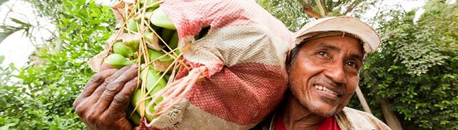 worker in banana plantation - crop nutrition Yara