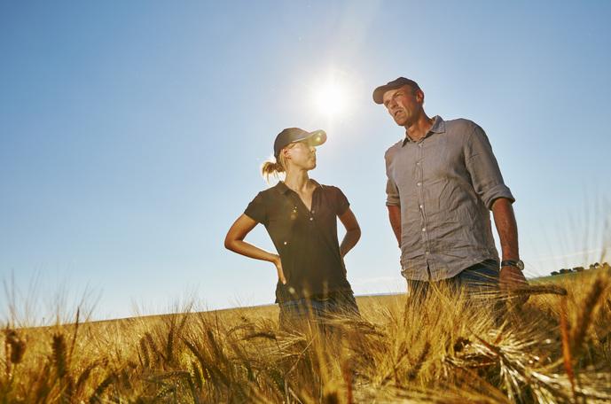 How to increase barley yield