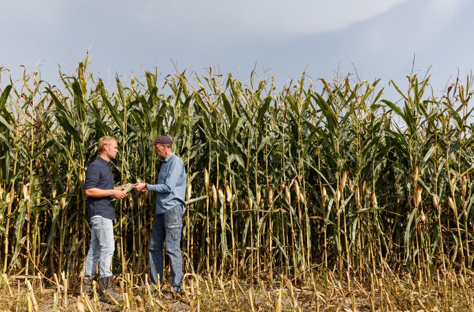 rendement maïs