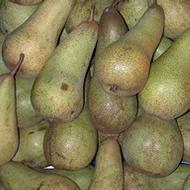 Increasing Pome Fruit Weight