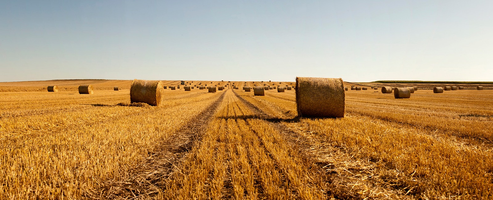 Field with harvest