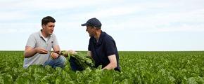 Two farmers in sugar beat field