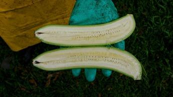 Seedless banana