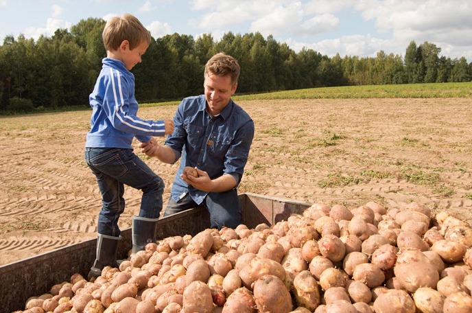 yara farmer and kid handling potatoes