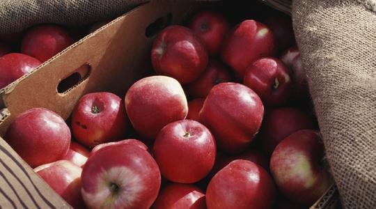 Improving apple colouration