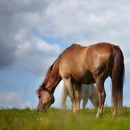 Nutrient management of horse paddocks