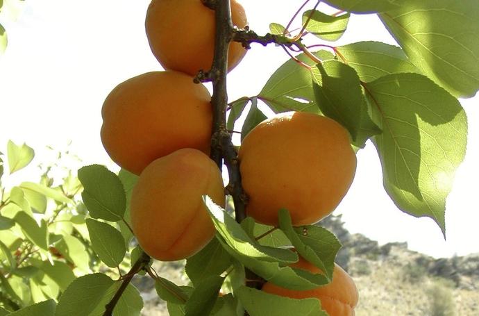 Як збільшити врожайність