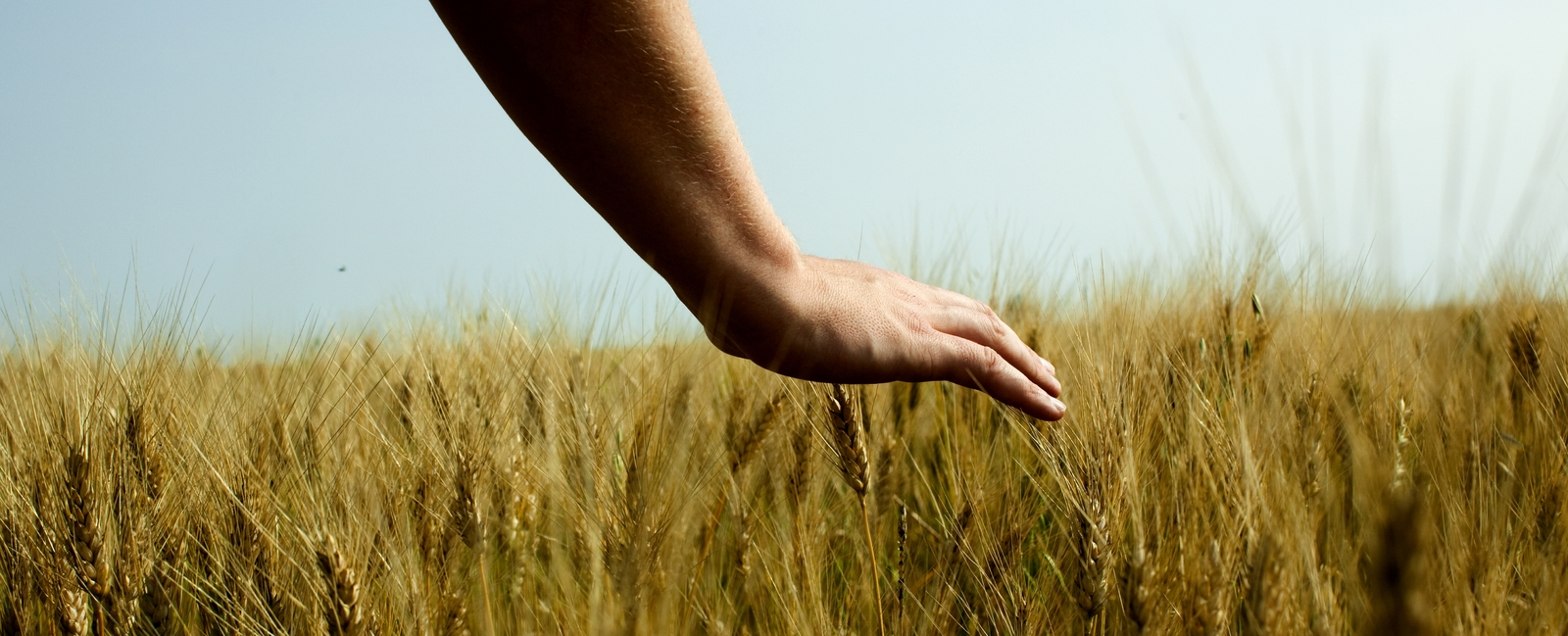 hands in the field