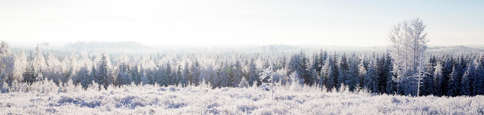 7 syytä lannoittaa metsää