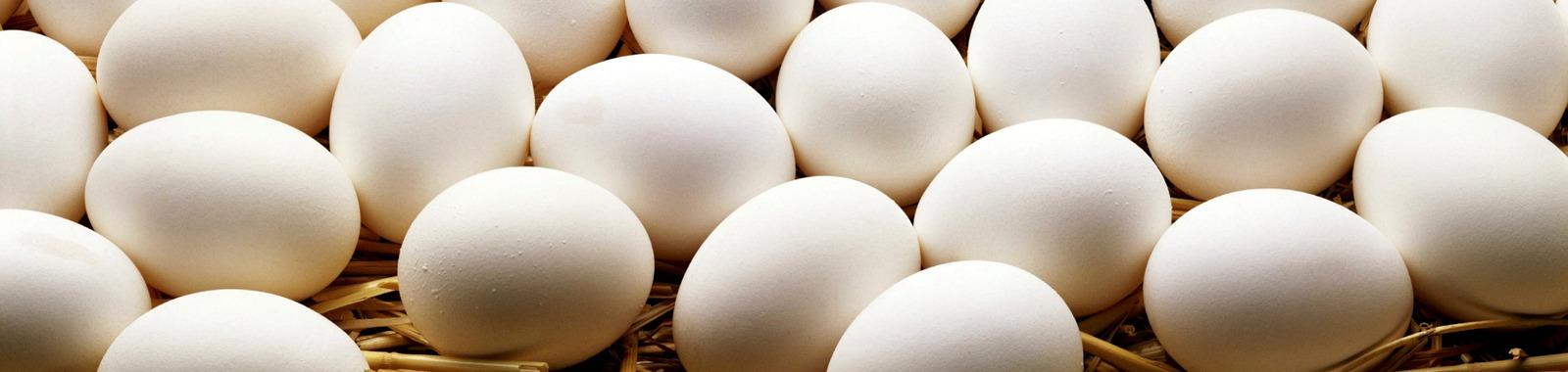 Kananmunasta runsaasti sleeeniä