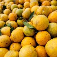 Citrus Juice Content