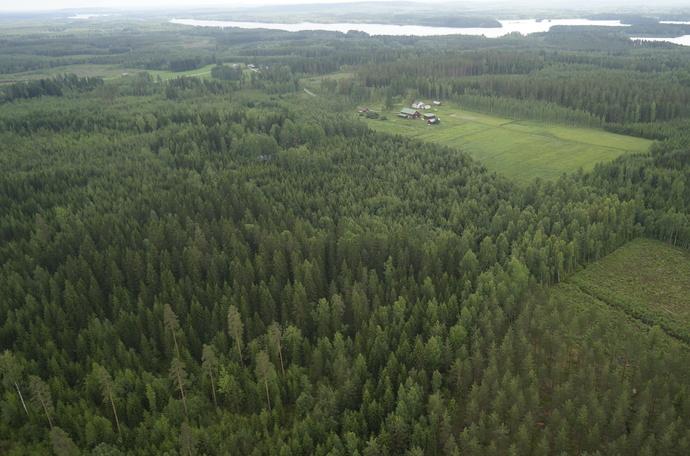 Metsät toimivat hiilinieluina