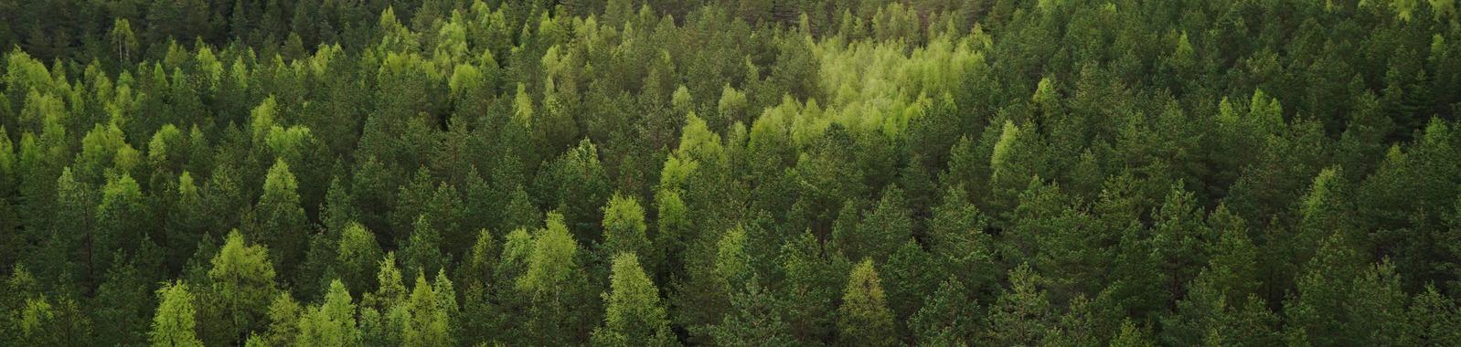 Metsän ravinnetilan selvittäminen