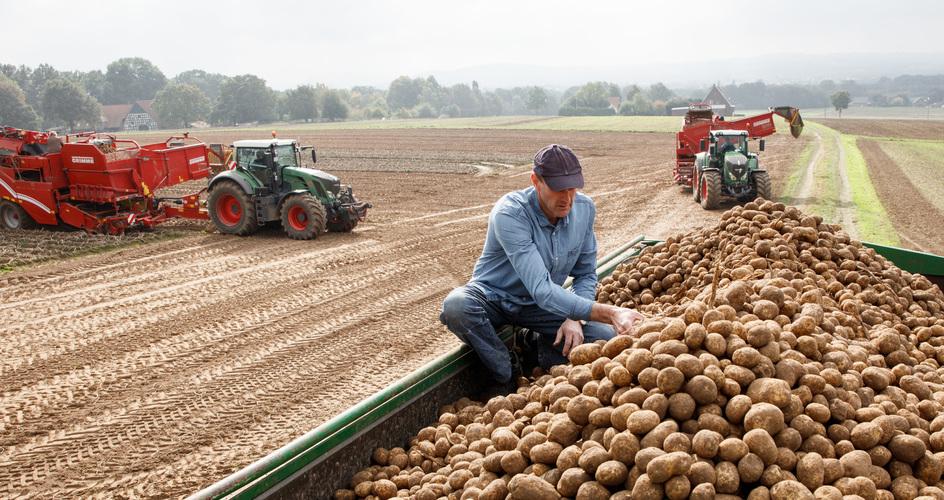 Program nawożenia ziemniaka
